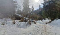 Aliante si schianta in mezzo al bosco: paura in Val Seriana