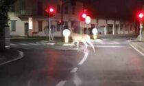 Il video del cervo a spasso per il paese, in Brianza