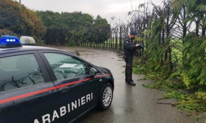 Sedicenne scappa da casa e incendia 50 alberi: danni per 7000 euro, denunciato