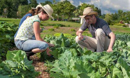 """Nasce """"Più impresa"""" di ISMEA per giovani agricoltori"""