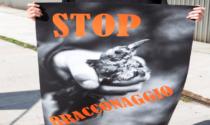 Ambientalisti contro Regione: nessuna restrizione anti-Covid per i cacciatori