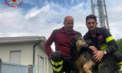 Cane cade nella centrale idroelettrica, a salvarlo ci pensano i pompieri