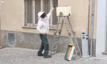 Uno sciame di api in piazza Setti, salvato dall'apicoltore