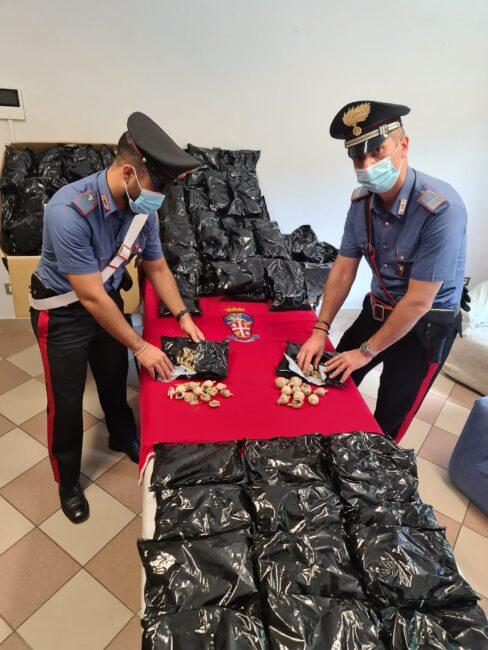 I carabinieri cremonesi con la droga sequestrata: si tratta di bulbi essiccati di papavero da oppio