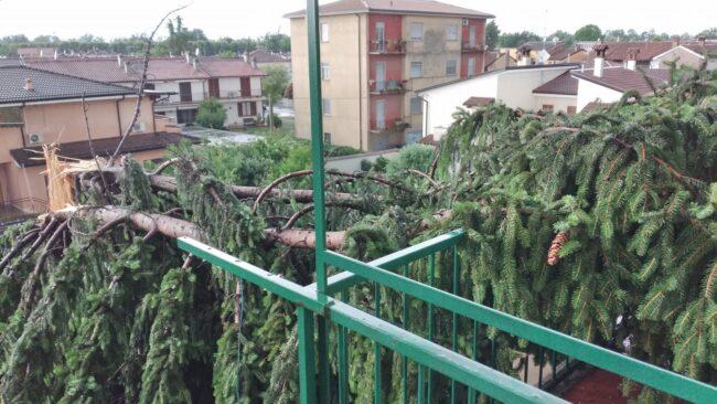 Rivolta, danni del maltempo: un pino finito su un balcone