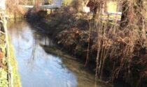 Glifosato nell'acqua, nella Roggia Vignola concentrazioni otto volte sopra i limiti di legge