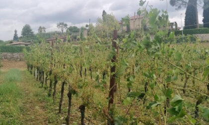 Maltempo in bergamasca, Coldiretti fa la conta dei danni