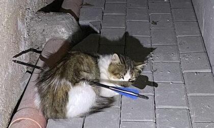 Gatto trafitto e ucciso da una freccia